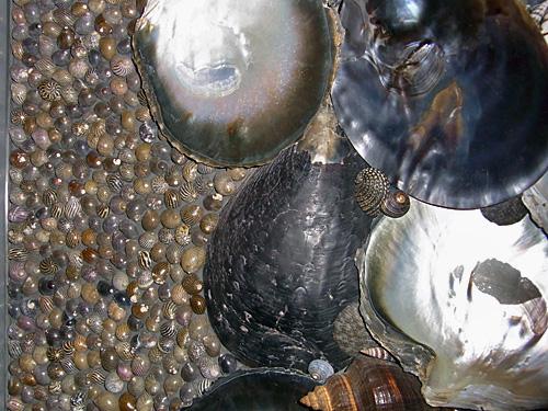 115.1:500:375:0:0:1213f:none:0:1:小さい貝殻、大きい貝殻がびっしりと壁を覆っています。自然の造形美。: